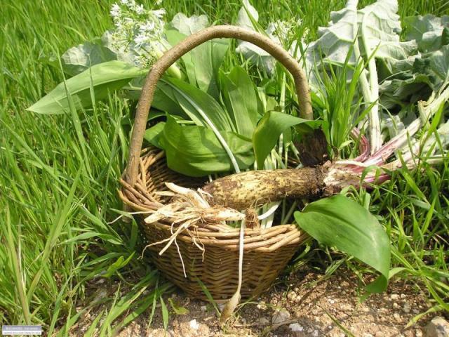 joe-foraging_basket